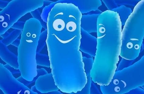 Лактобактерии для кишечника