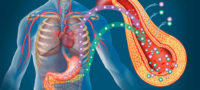 Препараты группы глиниды Старликс, Новонорм – регуляторы глюкозы в крови